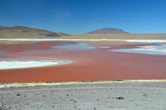 Laguna Colorada : Un beau souvenir