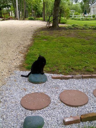 The Lightner Farmhouse: Jezebel, the farmhouse cat