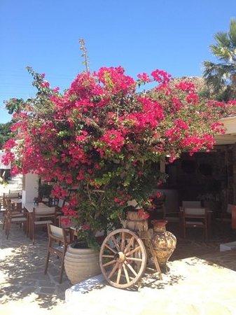 写真Naxos Hotel Kavos枚