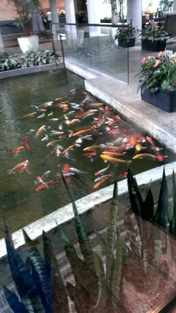Omni Houston Hotel Westside : Indoor fish pond