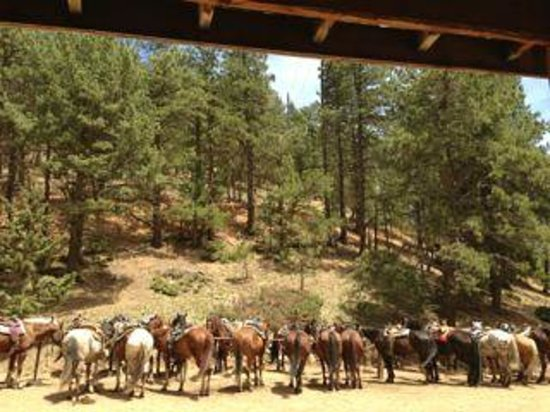 Old Stage Riding Stables: Getting the horses ready