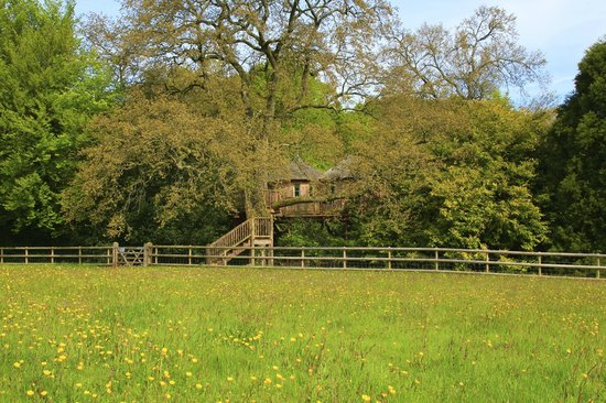 Harptree Court: View of the treehouse from the field