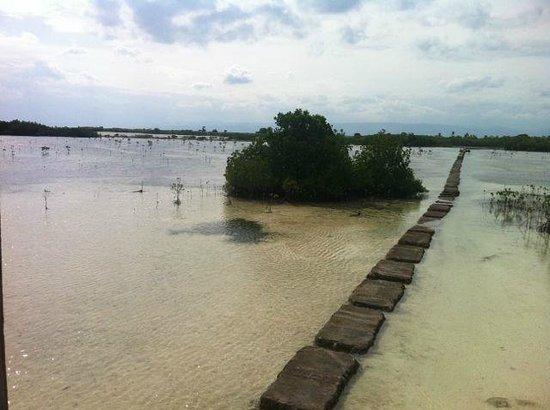 Olango Island: A stone walkway to the viewing platform