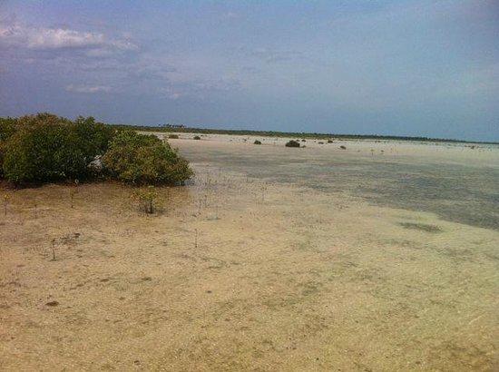 Olango Island: Vista of the feeding grounds