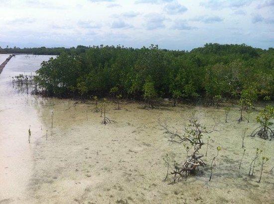Olango Island: The feeding grounds of the birds