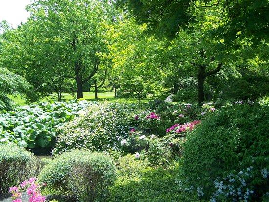 De belles pivoines picture of montreal botanical gardens for Camping le jardin botanique limeray