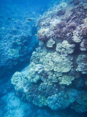 Honaunau Bay: Lovely reef