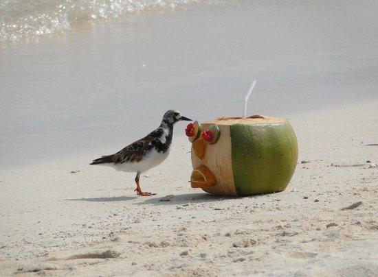 El Dorado Sensimar Riviera Maya: my coconut cocktail on the beach
