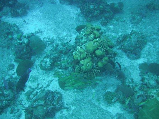 Cozumel Boat Trips: Reef