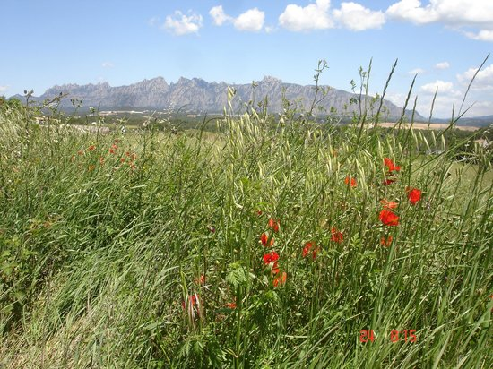 Can Bonastre Wine Resort: Otra vista de Montserrat