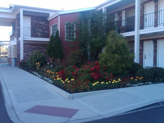 Best Western Horizon Inn: Flowers outside