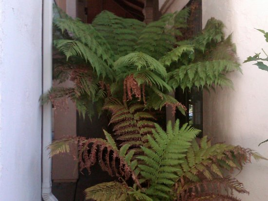 Best Western Posada Royale Hotel & Suites: beautiful plants and foliage