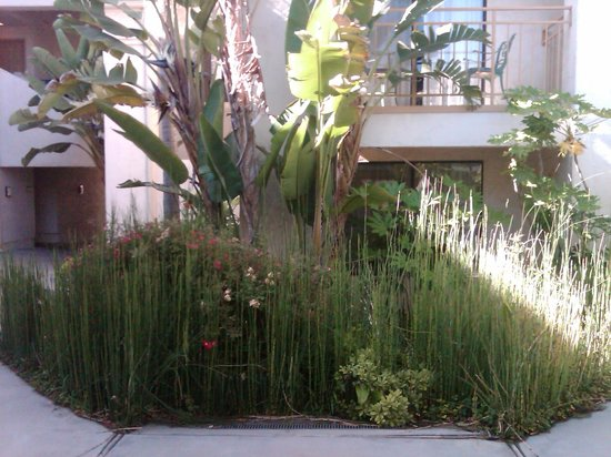 Best Western Posada Royale Hotel & Suites: unusual plants