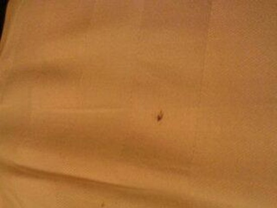 Bourne Hall Hotel: insect on bed
