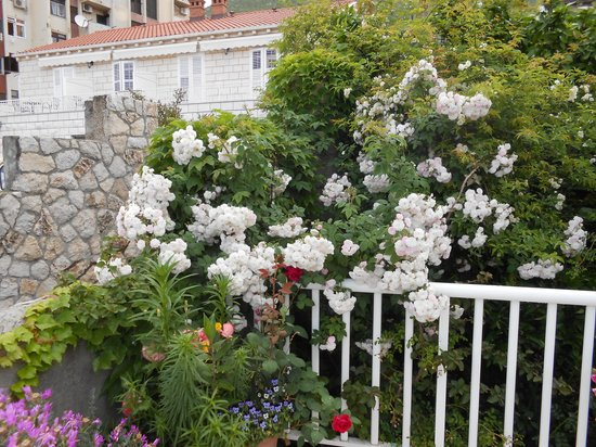 S&L Guesthouse: Terrace full of flowers