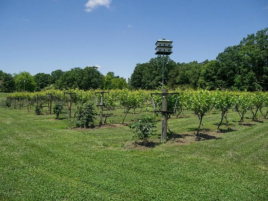 Another angled view of the Benjamin Vineyards area