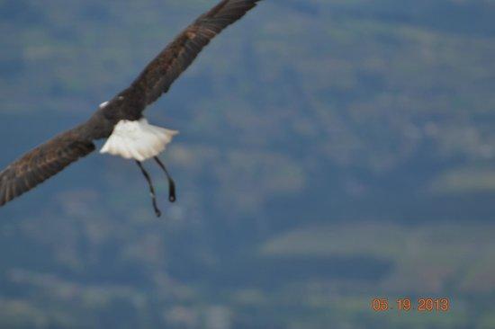 Condor Park: eagle on an air trip
