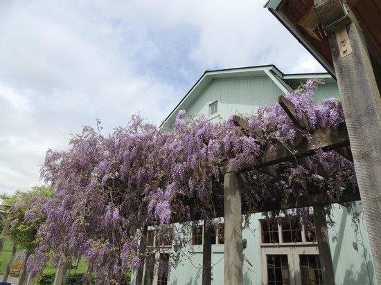 Fox Run Vineyards : The Flowers