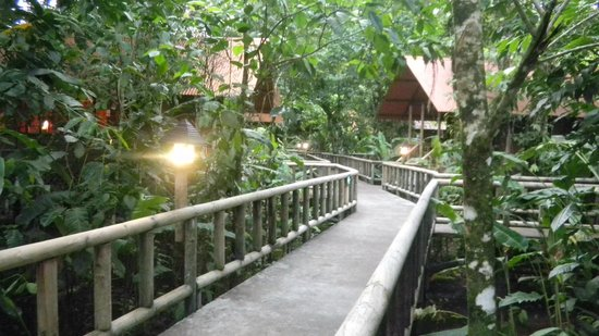 Pachira Lodge: Walkways were above the water and animal sounds were abundant!