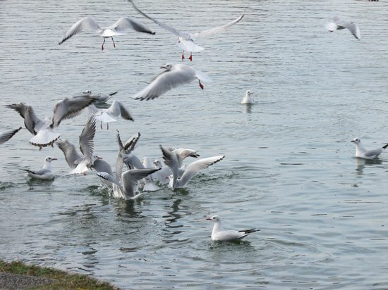 Ohori Park: free to  fly in lake