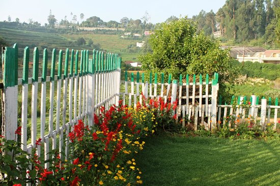 Bouganvilla: Flowers & gardens