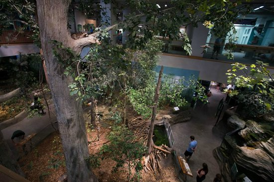 North Carolina Museum of Natural Sciences - Raleigh, NC