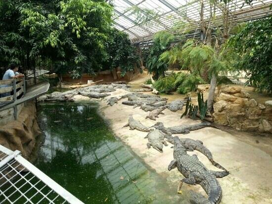Pierrelatte, Frankreich: some of the many crocodiles