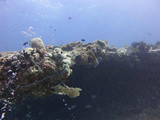PepeDiveCenter: arrecife