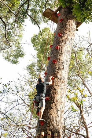 Jungle Xtrem Adventures Park: Tree Climbing