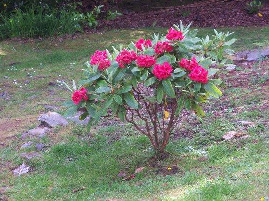Abbot's Brae: Spring Flowers!