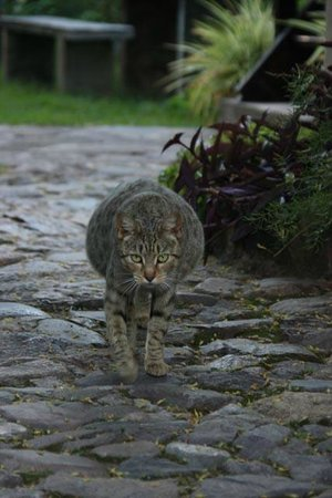 El Albergue Ollantaytambo: hotel cat