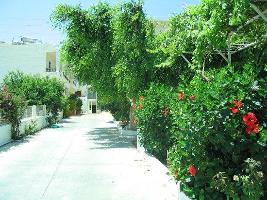 Paloma Garden Hotel : the way of hotel
