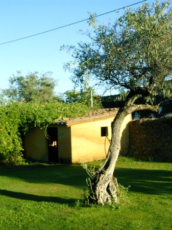 Finca Santa Marta: garden