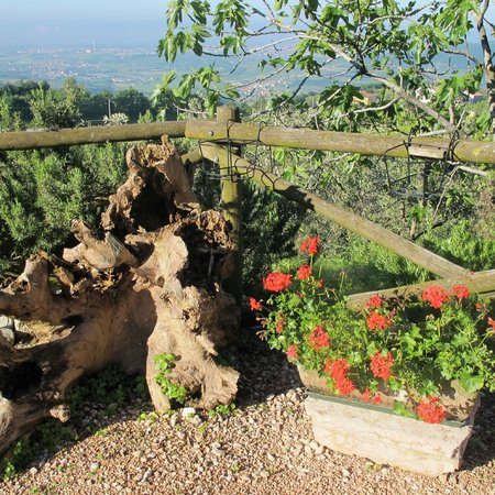Agriturismo La Perlara : fiori e piante ovunque