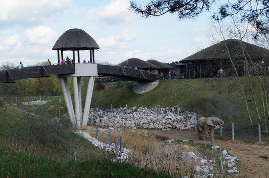 Stare Zoo Poznan: POZNAŃ  ZOO MALTA 2013