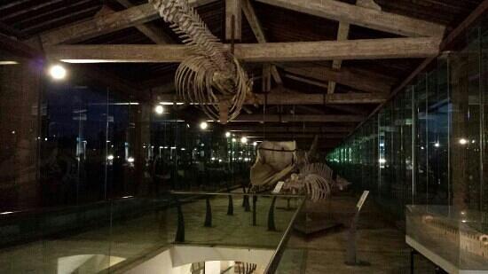 Museo di Storia Naturale e del Territorio: galleria cetacei