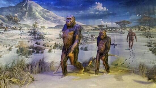 Museo di Storia Naturale e del Territorio: astrolopiteco