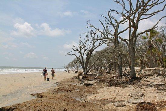 Botany Bay Plantation Heritage Preserve and Wildlife Management Area: Vreemd landschap op het strand