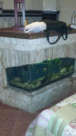 M & J Central Suites: fish tank