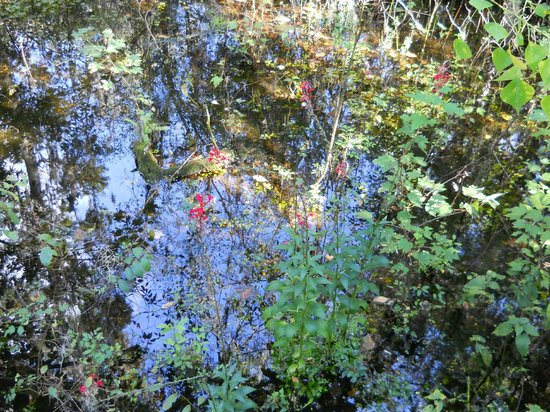 Eureka Springs Park: In dry times the water flow from the spring is low but still many lovely flowers bloom.