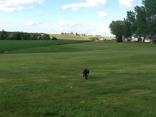 "Cuba City, WI: Abby enjoys some off-leash retrieving at what we called her ""Field of Dreams"" at Rustic Barn Cam"