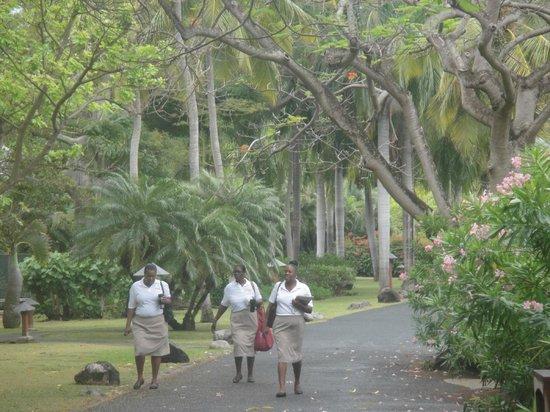 Rosewood Little Dix Bay: JARDINES