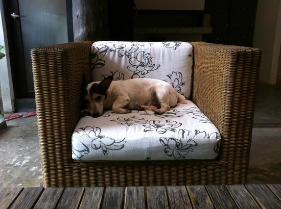 The Sundays Sanctuary Resort & Spa : dog lying on sofa at hotel