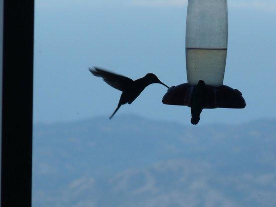 Poas Lodge and Restaurant: petit déj en compagnie des colibris