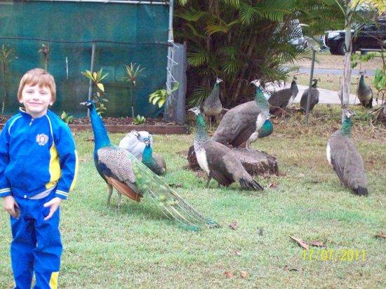 Pinnacle Village Holiday Park: true blue locals