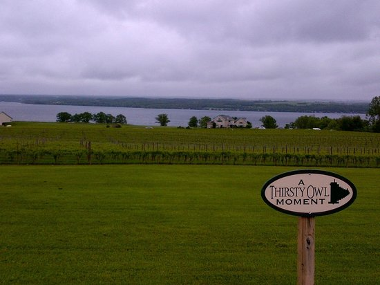 Ovid, NY: Great view at Thirsty Owl Winery & Bistro