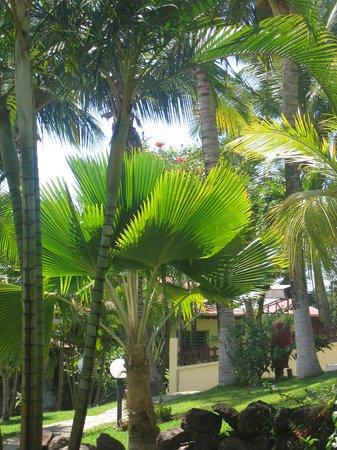 Habitation Grande Anse: vue en allant vers le bar