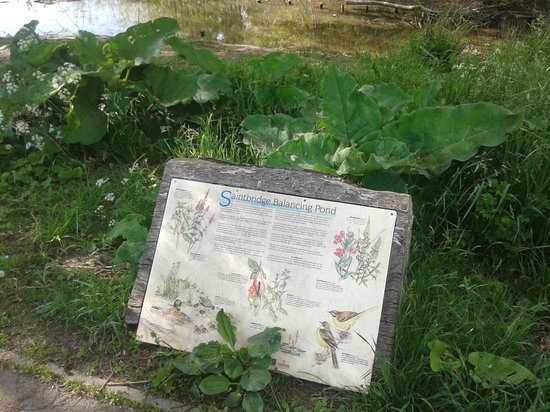 Saintbridge Balancing Pond: info board