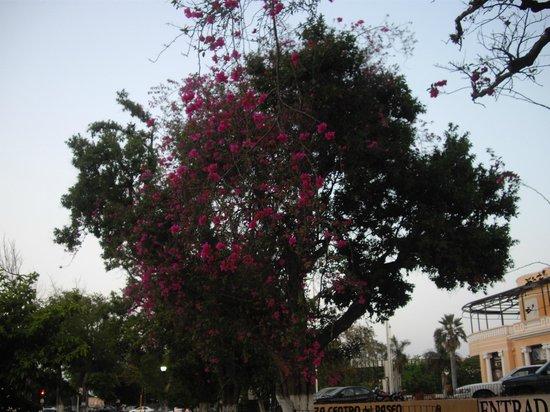Hotel El Conquistador: Las flores de los árboles me gustaron mucho.