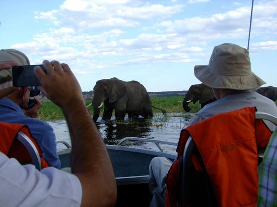 Sanctuary Chobe Chilwero: Getting up close and personal - what an honour!